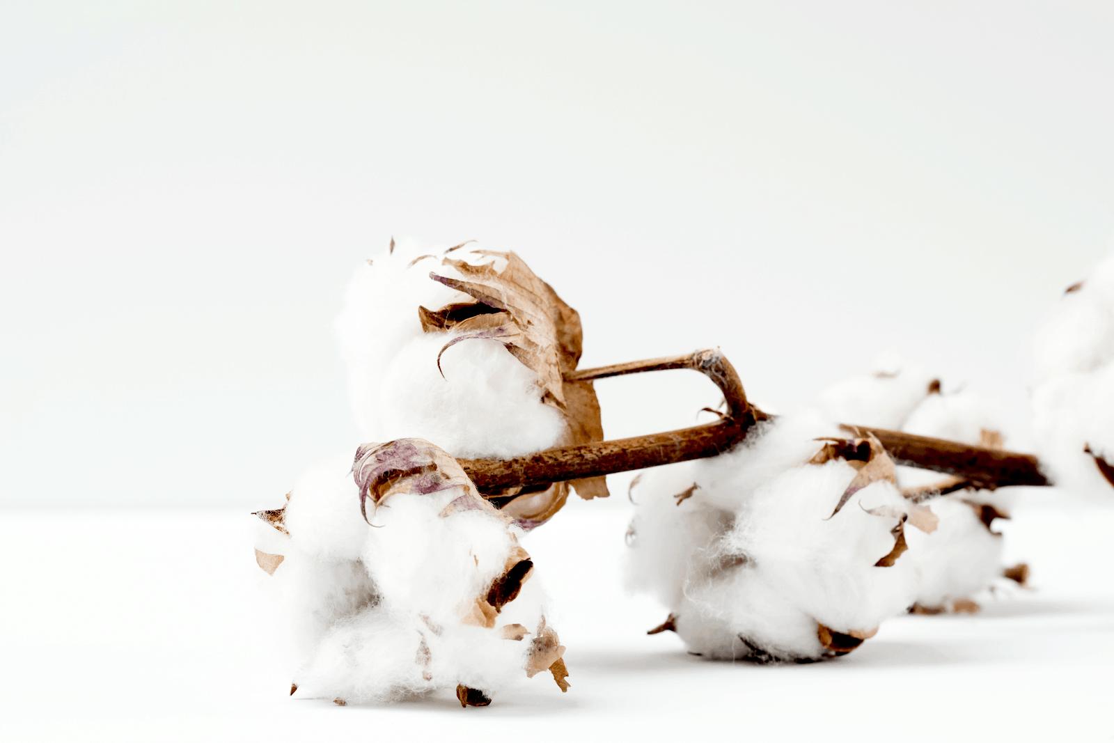 cotton plant pieces