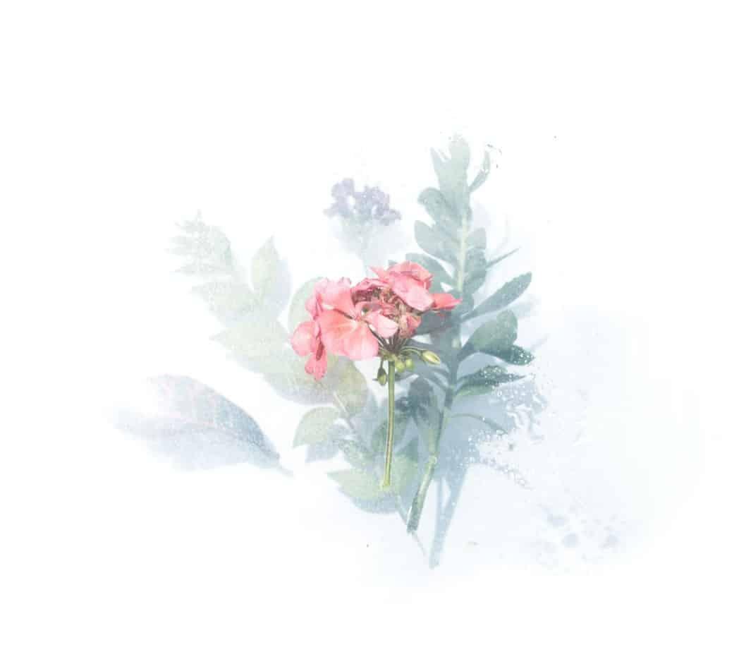 transparent floral goache vs watercolor verycreate.com
