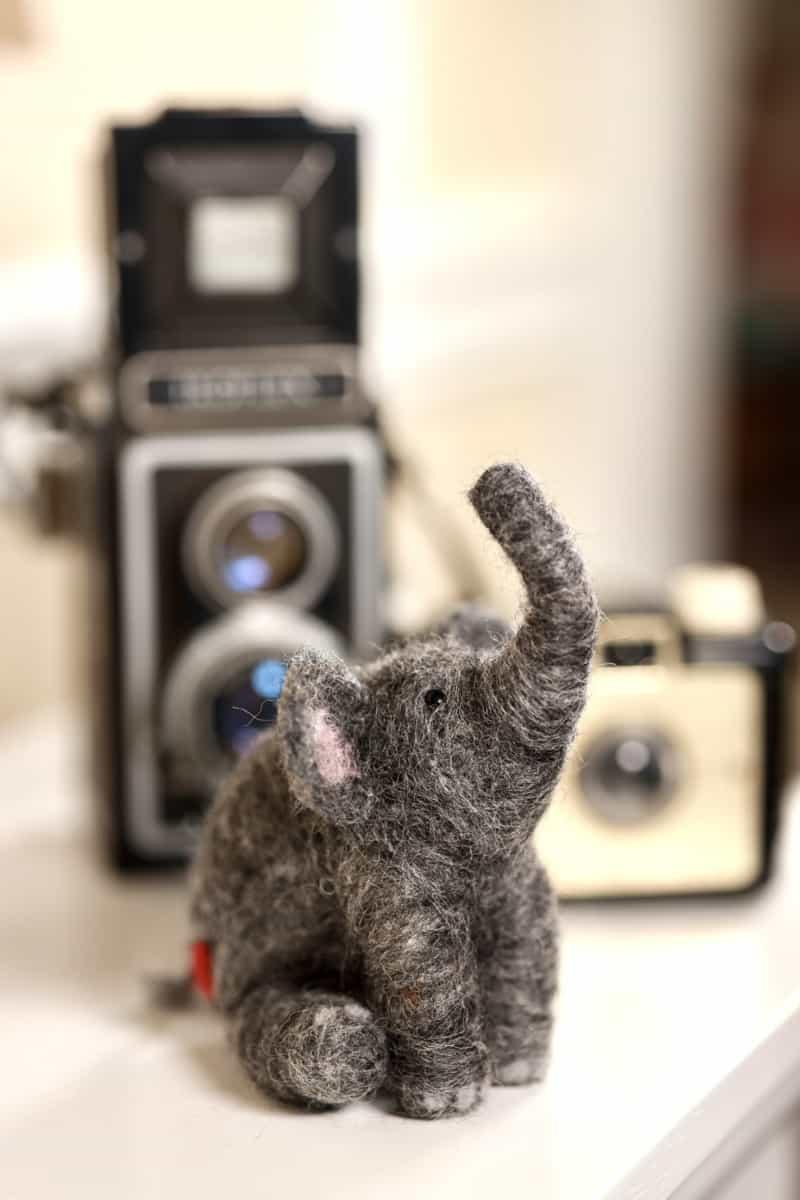 elephan and cameras Jules Bianchi verycreate.com Creator Spotlight verycreate.com